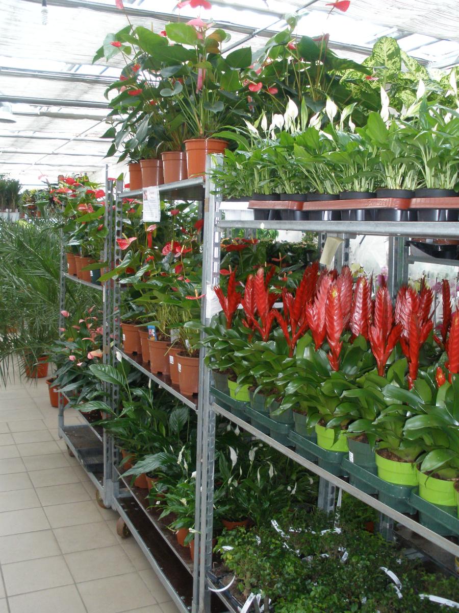 Краснодаре, заказ цветов из голландии комнатных растений