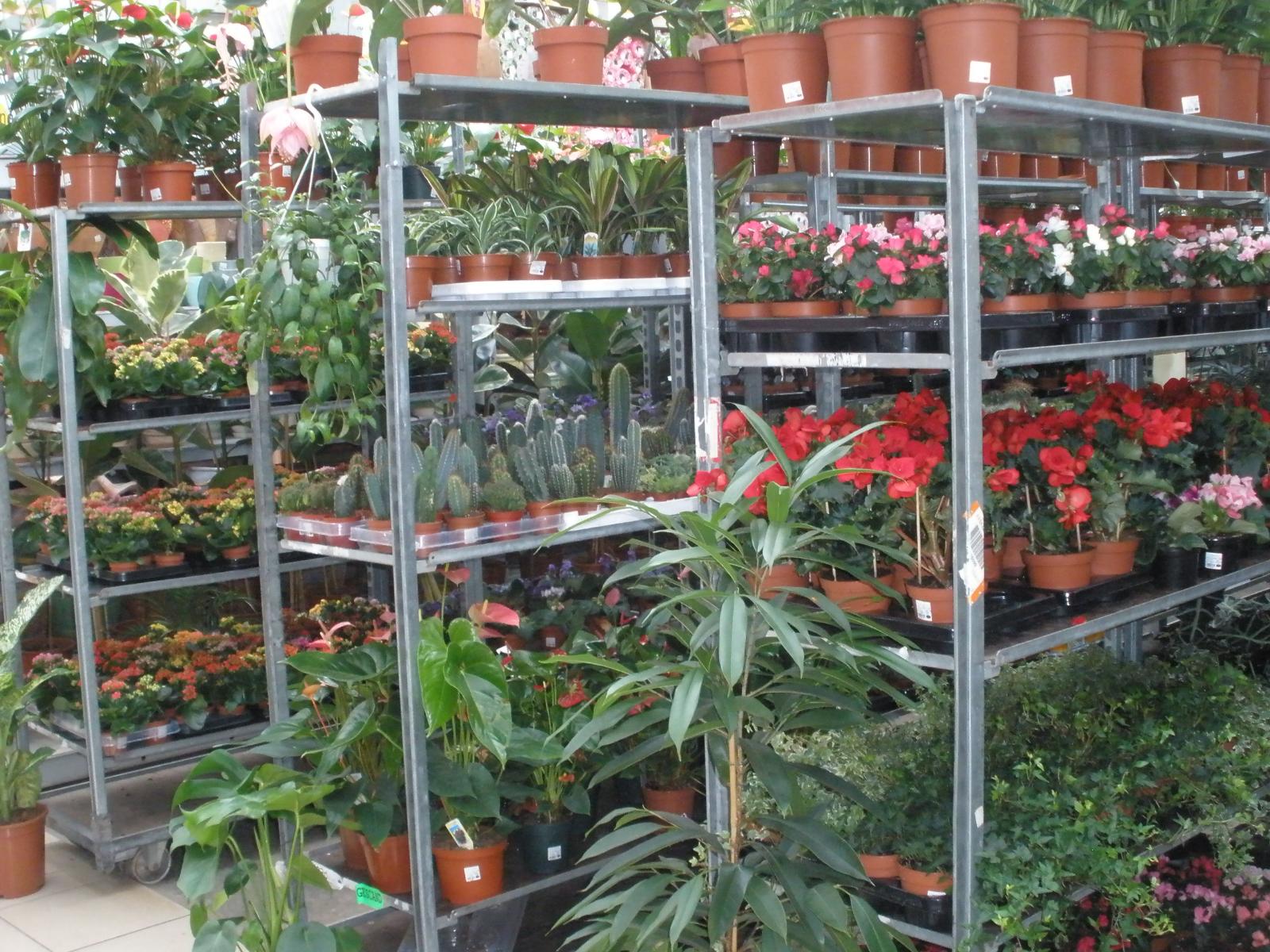 Цветов, продажа растений по оптовым ценам кузнецов фирма луидор